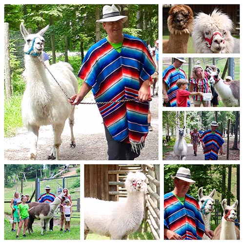 Lama-Wanderung | weltzuhause.at